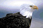 See Bald Eagles on the Vanishing Texas River Cruise